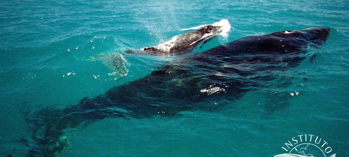 Observação de Baleias, Praia do Forte - Bahia