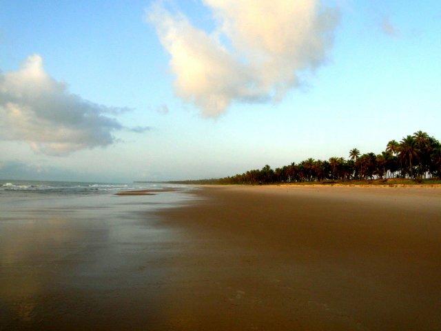 Cortina de coqueiros, Imbassai - Bahia